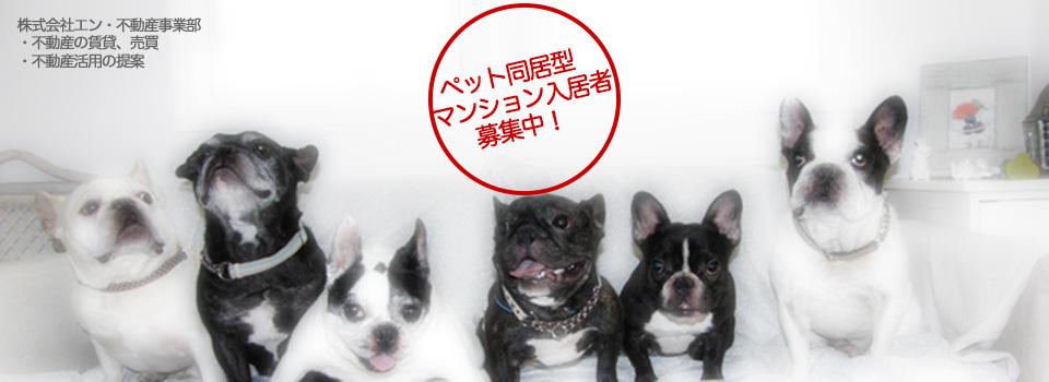 茨城県つくば市:不動産の賃貸・売買・活用の提案・ペット同居型マンション・貸店舗・貸事務所