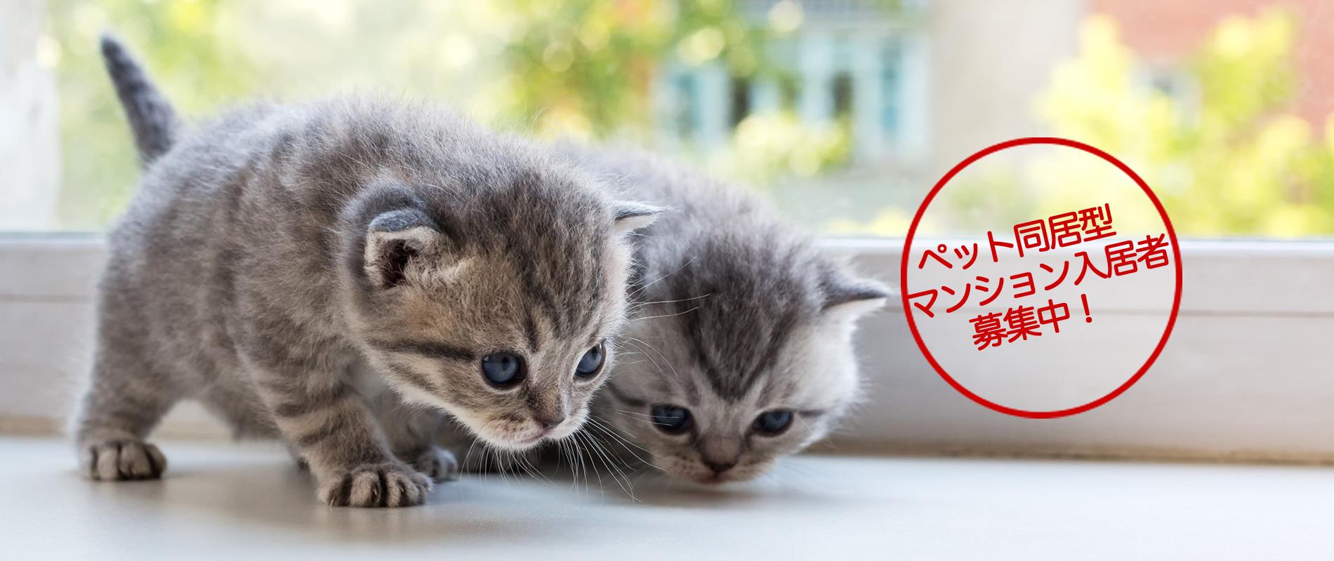 ペット同居型マンション入居者募集中